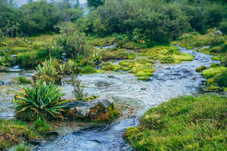 Scenic nature background with lush vegetation in small mountain stream. Beautiful highland flora in small river. Idyllic nature scenery with rich alpine greenery and spring water. Vivid wild plants.