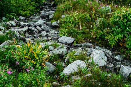 Manifold of herbs and flowers near spring water among stones. Mountain clear water stream near motley grasses. Rich vegetation of highlands. Small river among rich flora. Beauty of alpine nature.