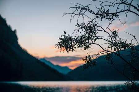 Amazing silhouette of tree branches on blurry background of alpine lake at sunrise. Colorful calm water of mountain lake in dawn colors in blur. Beautiful scenery with vivid water in sunny morning.