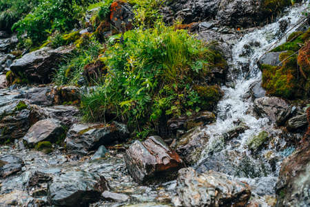 Scenic background with clear spring water stream among thick moss and lush vegetation. Mountain creek on mossy slope with fresh greenery and many small flowers. Colorful backdrop of rich alpine flora. Stock fotó