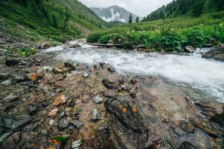 Scenic landscape with big stones near mountain river. Powerful water stream among boulders in mountain creek with rapids. Fast flow among rocks in highland brook. Beautiful scenery with small river. 스톡 콘텐츠
