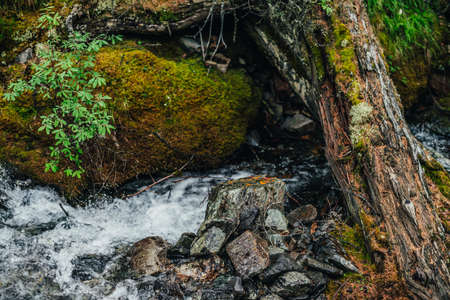 Beautiful mountain creek among rich flora in forest. Atmospheric landscape with mossy log in small river. Fallen tree trunk with moss in cascades of mountain creek. Fast stream with mosses in woods.