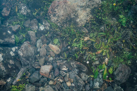 Nature background of green vegetation and stones in clear water. Underwater flora close-up. Natural texture of greenery on bottom of mountain lake after flood. Calm transparent water surface of lake.