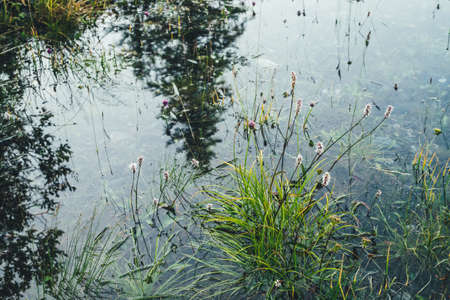Nature background of green vegetation and stones in clear water. Greenery on bottom of mountain lake after flood. Reflection of trees silhouettes in calm transparent water surface. Underwater flora. 스톡 콘텐츠