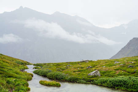 Vivid green alpine landscape with mountain creek among rich vegetation and mountains among low clouds. Colorful scenery with mountain brook, wild flora and rocks in fog. Scenic nature of highlands. 스톡 콘텐츠