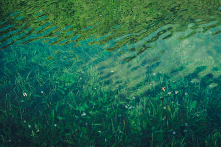 Nature background of green vegetation in clear water. Underwater flora close-up. Natural texture of greenery on bottom of mountain lake after flood. Calm transparent water surface of mountain lake. 스톡 콘텐츠