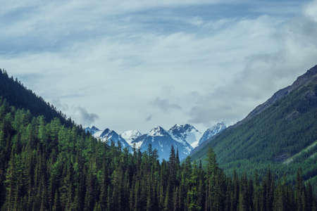 Atmospheric nature scenery with great beautiful snowy mountains behind coniferous forest under cloudy sky. Dramatic landscape with big mountain peak with glacier behind green fir tops in overcast day. 스톡 콘텐츠