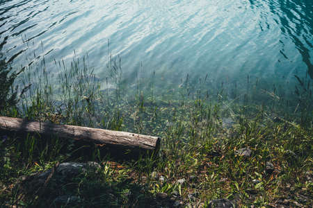 Rotten fallen tree trunk floats in azure calm water near shore with rich flora. Beautiful driftwood log in cyan lake water. Nature background with wooden log and green grasses in mountain lake closeup