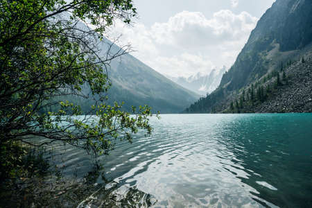 Amazing view through trees to snow mountains and meditative ripples on azure clear calm water of mountain lake. Atmospheric mountain landscape with turquoise alpine lake and glacier through thickets. 스톡 콘텐츠