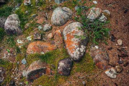 Scenic forest background with conifer branch and big mossy stones among mosses and lichens. Colorful natural backdrop with big boulders with mosses and lichens in coniferous forest. Nature background.