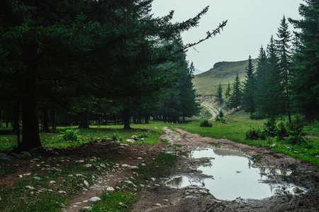 Dark atmospheric forest landscape with puddle on dirt road. Gloomy coniferous forest in mountains in rainy weather. Landscape of dark woods on background of rocky hill. Woody scenery in rainy weather.