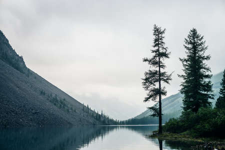 Atmospheric gloomy landscape with conifer trees on shore of mountain lake in rainy weather. Coniferous trees on mountainside in low clouds. Bleak misty scenery with alpine lake under gray cloudy sky.