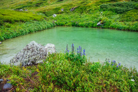 Beautiful small blue flowers of larkspur grows on shore of mountain lake with raindrops on green water. Vivid green landscape with rain drops on lake water. Wild flora near alpine lake with droplets. 스톡 콘텐츠