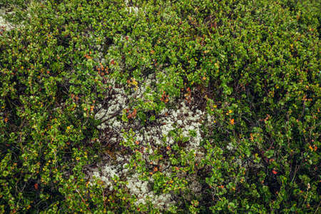 Beautiful nature background with wild flora of highlands close-up. Natural backdrop with green rich vegetation of mountains closeup. Full frame of scenic alpine lush greenery. Nature texture of plants 스톡 콘텐츠