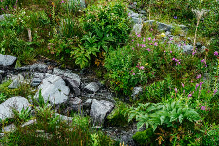 Small pink flowers of fireweed grows near spring water among motley grass. Mountain clear water stream among stones and rich vegetation. Blooming sally among highland flora. Beauty of alpine nature.