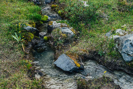 Scenic nature background with lush grasses and flowers near small mountain stream with clear water. Beautiful wild flora of highlands in small river. Idyllic nature scenery. Rich alpine vegetation.