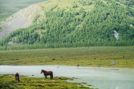 People in inflatable boat with oars cross mountain river in mist. Horses graze near misty mountain river. Mountain tourism in Altai. Water crossing. Russia, Altai Republic, Akkem Lake, 03 August, 2019
