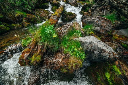 Scenic landscape to wild beautiful flora on small river in woods on mountainside. Mossy fallen tree trunk and boulders with mosses in clear spring water. Forest scenery to cascades in mountain creek. 스톡 콘텐츠