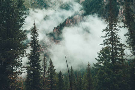 Atmospheric ghostly dark forest in dense fog among big rocks. Gloomy misty scenery with rocky mountain behind coniferous trees in low clouds. Alpine landscape at early morning. Hipster, vintage tones. 스톡 콘텐츠