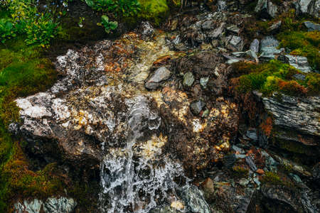 Scenic landscape with clear spring water stream among thick moss and lush vegetation. Mountain creek on mossy slope with fresh greenery and many small flowers. Colorful scenery with rich alpine flora.