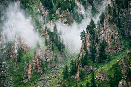 Coniferous trees on sharp stones of rocky mountain in dense fog. Low cloud near high rock with forest. Vivid foggy green landscape with rocks and trees in clouds. Steep slopes with boulder streams. 스톡 콘텐츠