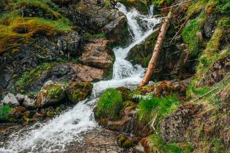 Scenic landscape with beautiful waterfall in forest among rich vegetation. Atmospheric woody scenery with fallen tree trunk in mountain creek. Spring water among wild plants and mosses on rocks. 스톡 콘텐츠