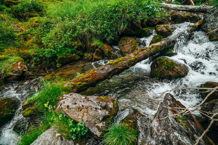 Scenic landscape to wild beautiful flora on small river in woods on mountainside. Mossy fallen tree trunks and boulders with mosses in clear spring water. Forest scenery to cascades in mountain creek.