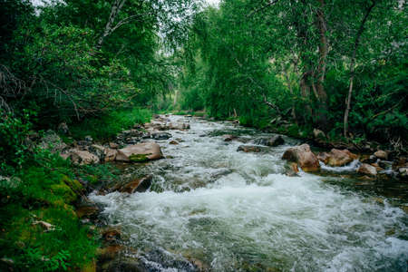 Scenic landscape with beautiful mountain creek with green water among lush thickets in forest. Idyllic green scenery with small river and rich greenery. Green water in mountain brook among wild flora. 스톡 콘텐츠