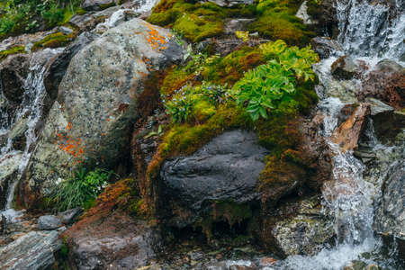 Scenic background with clear spring water stream among thick moss and lush vegetation on stones. Mountain creek on mossy rocks with fresh greenery. Colorful backdrop with rich alpine flora. 스톡 콘텐츠