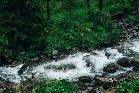 Atmospheric green forest landscape with mountain creek. Beautiful mystery taiga with wild river. Vivid scenery of forest freshness. Rich greenery along mountain river with rapids in tenebrous woodland 스톡 콘텐츠