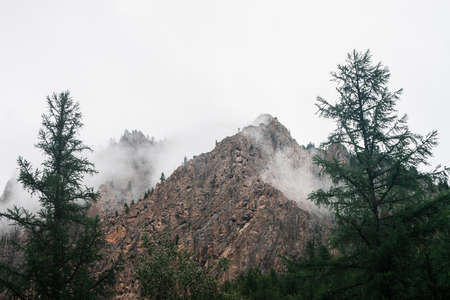 Ghostly alpine view through branches and low clouds to beautiful rockies. Dense fog among giant rocky mountains with trees. Atmospheric highland landscape. Big cliff in cloudy sky. Minimalist scenery.
