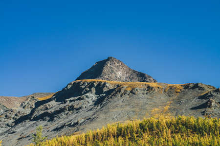 Scenic alpine landscape with sharp rock pinnacle and snow-covered mountain in sunlight in autumn. Motley mountain scenery with gray black orange mountain with sharp top in sunshine above autumn forest
