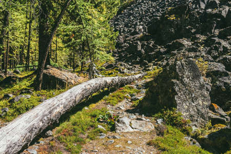 Beautiful green forest landscape with tree trunk on trailway among mountain wild flora in sunshine. Colorful sunny scenery of mountain forest with wild plants among rocks near moraine hill in sunlight Standard-Bild