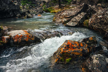 Scenic nature background of turquoise clear water stream among rocks with mosses and lichens. Atmospheric mountain landscape with mossy stones in transparent mountain creek. Beautiful mountain stream.