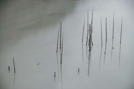 Atmospheric nature background with group of tree trunks in lake water surface. Many dead trees in deep green water of mountain lake. Minimal backdrop of green water surface with old trees trunks.