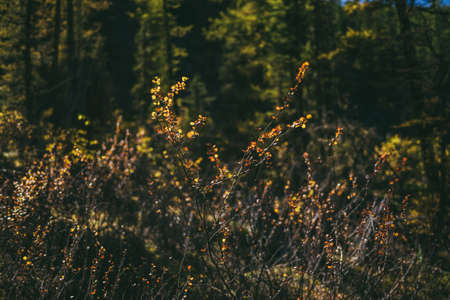 Golden leaves in sunshine on background of autumn forest bokeh. Minimalist nature backdrop with sunlit yellow foliage in fall time. Scenic minimalism in autumn colors. Orange leaves in fall colors. Standard-Bild