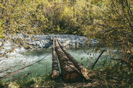 Scenic landscape with log bridge over mountain river in wild autumn forest in sunshine. Vivid autumn scenery with beautiful river among trees and thickets in sunny day. Mountain brook in fall time.