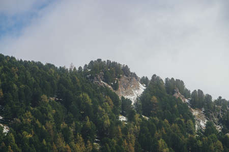 Scenic autumn landscape with sharp rocks on forest mountain in low clouds. Beautiful alpine scenery with rocky mountain peak with snow and coniferous trees under cloudy sky. Yellow larches in autumn.