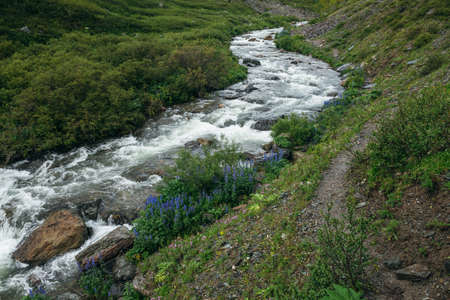 Green landscape with violet flowers of larkspur and wild flora near clear mountain river. Wonderful scenery with transparent water of mountain creek. Scenic view to small river with wild vegetation.