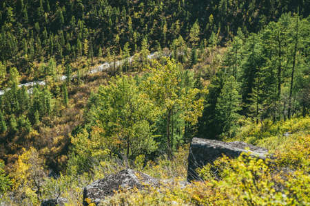 Colorful autumn landscape with yellow trees on steep mountainside in golden sunlight. Top view to autumn forest in green and yellow colors on slopes and valley in gold sunshine. Sunny autumn scenery. Standard-Bild