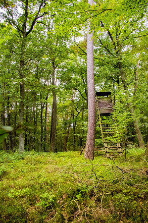 observation: Abandoned observation tower in the forest rangers.