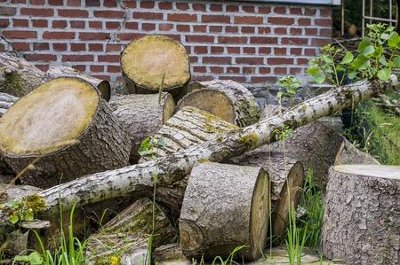 Large logs piled.