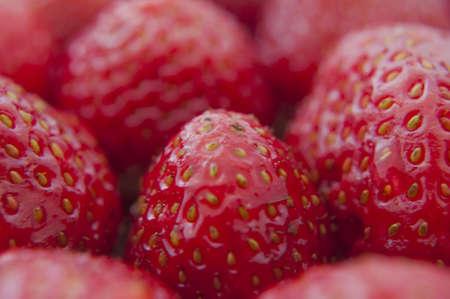fresh strawberries closeup .texture bluenerry, selective focus photo
