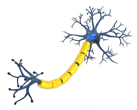 Isolated neuron on white background photo