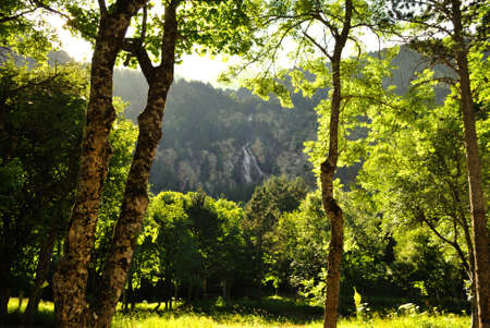 Forest in the pyrenees photo