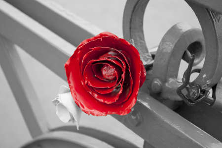 Metal rose  photo