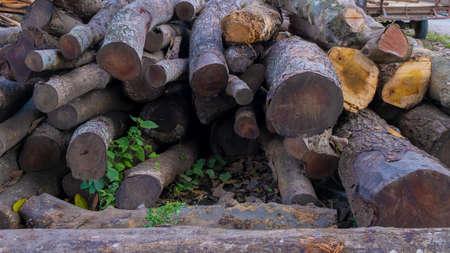 A pile of mahogany logs near the street.