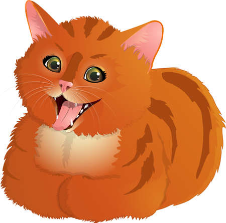 Ginger, laughing cat