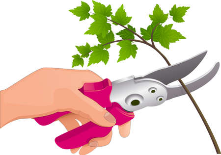 The hand holds the pruner Illustration