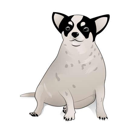 白いボディと完全に塗られた頭のチワワ犬  イラスト・ベクター素材